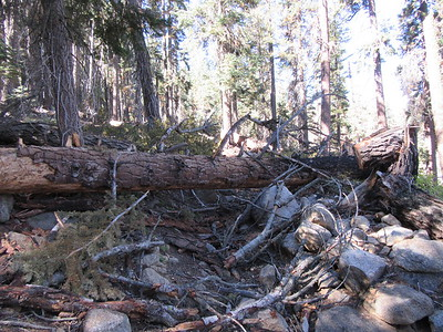 ... this blowdown across the trail near Deer Creek.