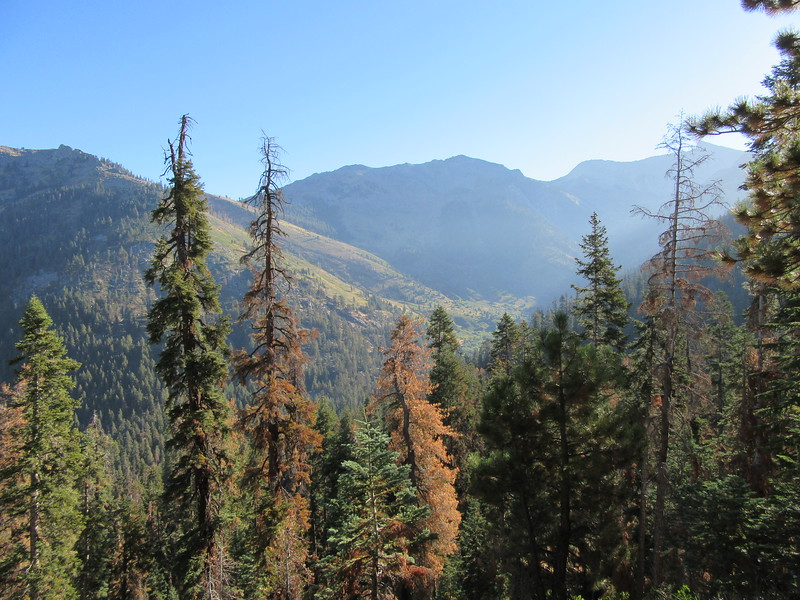 As I headed up, I got this view back down at Mineral King in the valley, then ...