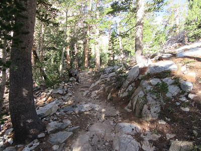 ... climbed steeply, mostly through shaded forest until ...