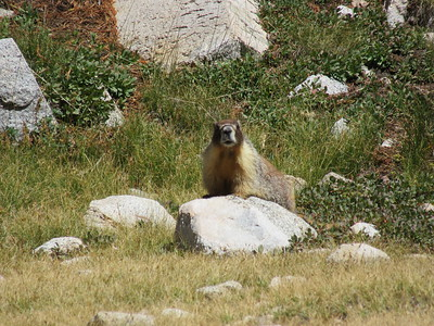 ... at this marmot who seemed to think my campsite was his playground.
