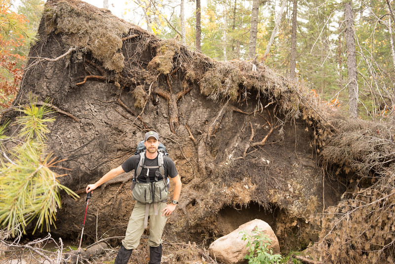 There were several very large tree uprootings. They were big due to the rocky ground causing the roots to spread out instead of go deep.