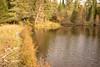 One of many beaver dams.