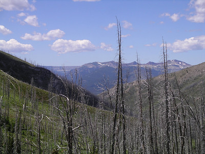 This side of the pass was all burned in 1988.  The wall in the far distance is our destination by tomarrow evening!!
