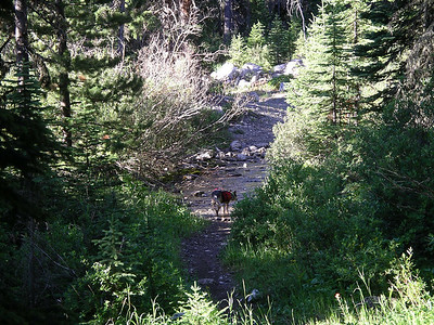 Chuck dropped us off at the South Fork of the Teton trailhead and took our truck back to his ranch.  Dusty is checking out this treacherous river crossing!!