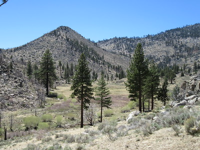 My view west across Crag Creek and over a portion of Clover Meadow.
