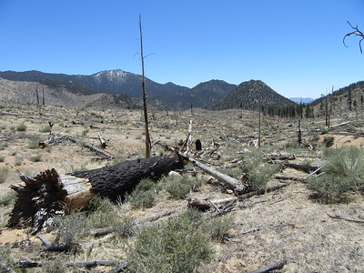The trail continued through the burn area created several years ago, but even though many large pine trees previously grew there, none are growing there now.  Not a sapling anywhere; instead, brush is starting to cover the area.