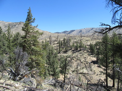 ... I got farther away from the river and entered a burn area shortly before ...