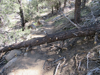 I soon ran into one of the over 40 blowdowns across the trail that I found during my trip.  All the following photos of blowdowns are, of course, a component of my customary trail report to the Forest Service to help with trail maintenance.