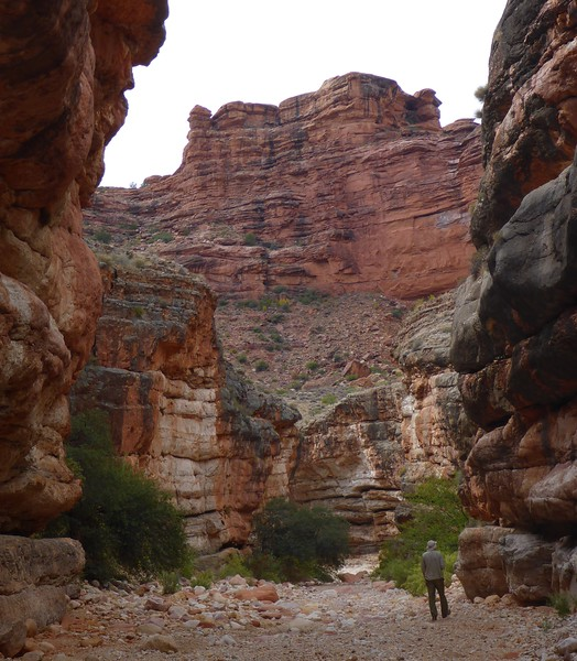 Day 3 - Ron and I hiked down Jumpup Canyon for a short distance. We retraced our steps and exited before the Redwall  to get to Indian Hollow.