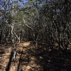 Trail lined with Mtn Laurels
