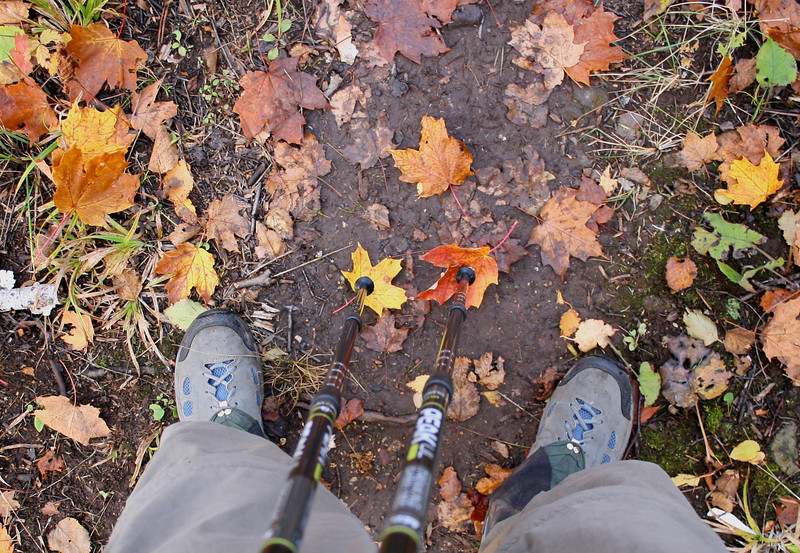 Leaves constantly became stuck to my trekking poles.