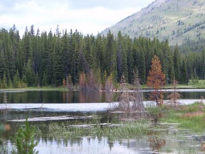 Day 3:  Elk swimming in Beaver Lake