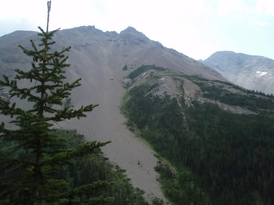 Part of Mt Field (elevation 8590) along the Badger Pass Trail