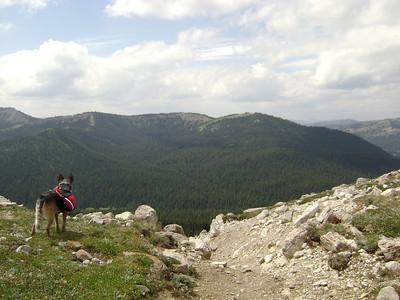 Top of Badger Pass