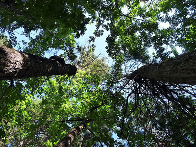 Looking up from my tent sight.