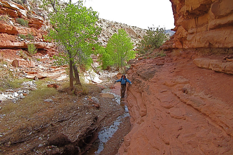 Cottonwood Spring<br /> Photo by John Otter
