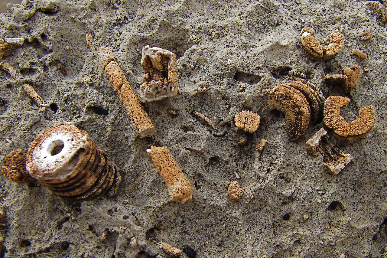 Lots of fossils located near the fence.<br /> Photo by John Otter