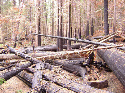 This is what MOST of the trail was like...crawling over LOTS of burned and downed trees.