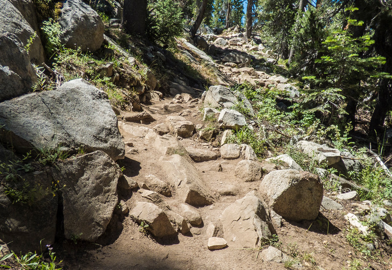The trail between Sunrise and May Lake camps