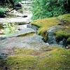 The Moss Rock is downstream from our camp and past an Upper Creek ford.  It's a special place.