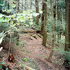 Leg 5 of the Nutbuster trail is an Open Cove which used to be fantastic (in 2006) but by 2012 has become a dead hemlock forest covered in briars.