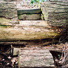 Here is a closeup of the old hemlock and a stairway to hell.