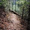 Here is the Pine Ridge trail as it nears Warden's Field.