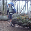 I leave the 'Berries and climb up to Mill Gap and pass thru the giant oak blowdown.