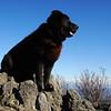 Shunka has become King Dog of the Mountain as he surveys his kingdom.
