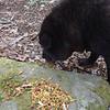 Shunka has to eat, too.