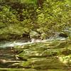 A trailside view of Slickrock Creek.