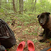 Shunka is a great trail companion and watches me prepare dinner at Wolf Laurel Camp.