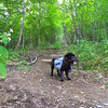 We decide to take the Horse Cove trail and survey the new trailwork by the SCA.