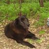 Shunka dog.