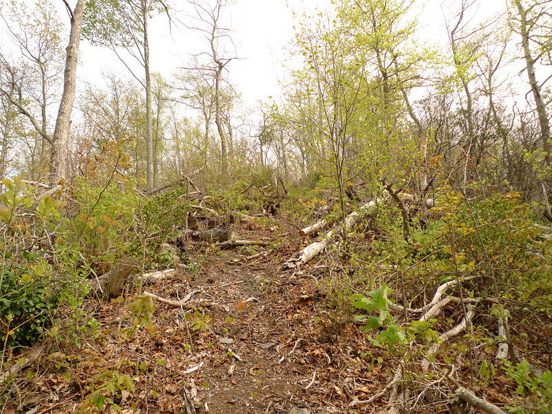 This shows the Hemlock Creek trail after some trailwork by the Crosscut Mountain Boys.  Thanks.