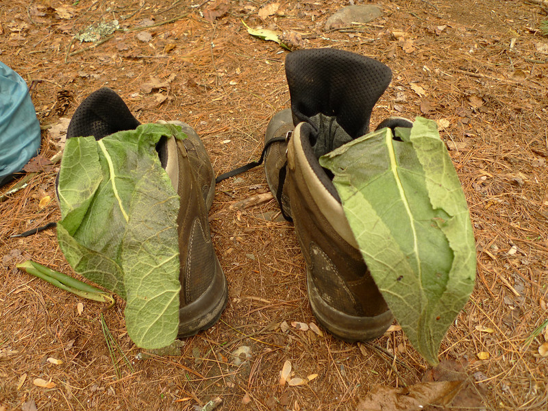 AN OLD INDIAN TRICK:  Put mullein leaves in your boots! It helps.