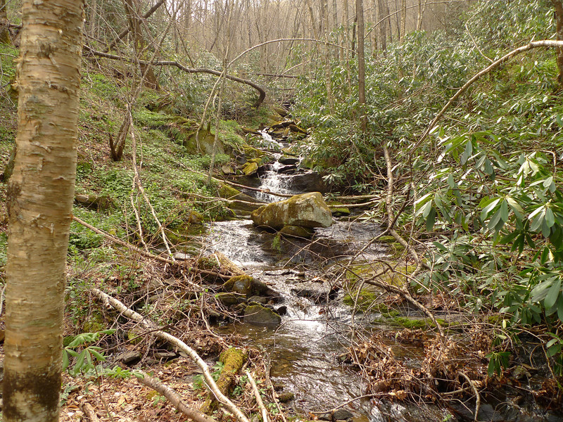 I leave Barrel Gap and take the BMT Connector to Snow Camp and Fodderstack Ridge and pass this favorite creek I call Birch Creek.