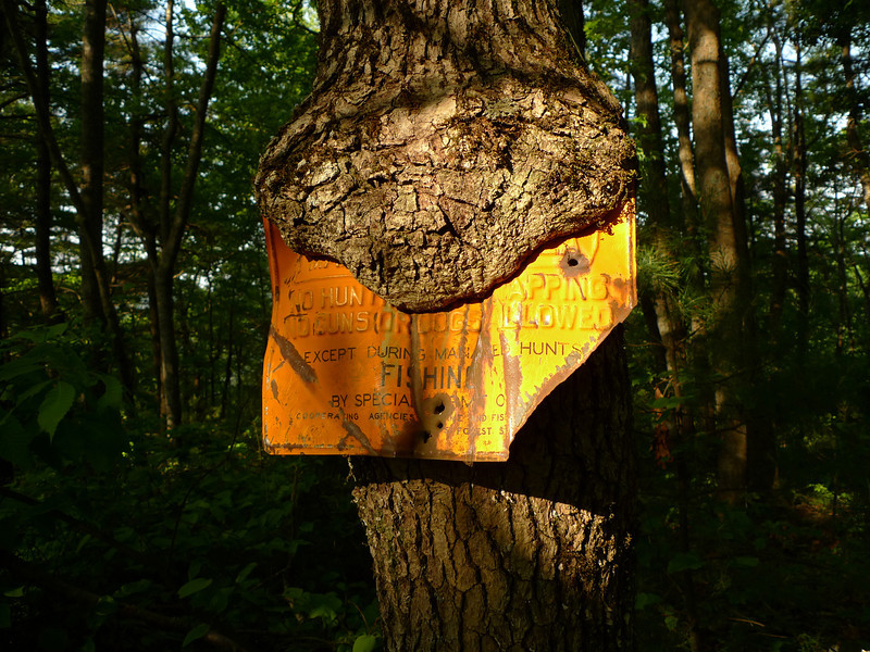 Another poor sign gets eaten by the Devil Tree.