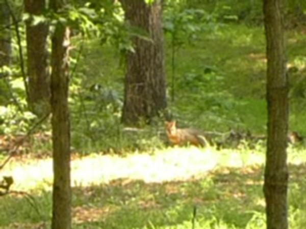 Gotta be a fox!