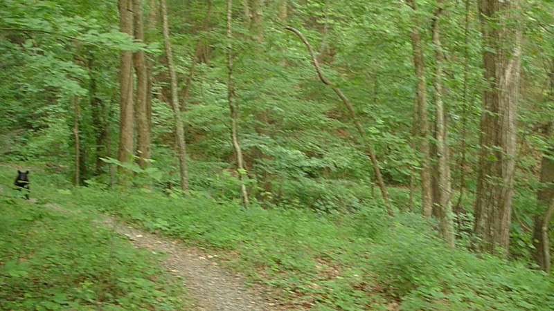On my hike out I run into a couple black bears walking down the trail towards me.  We say our hellos.