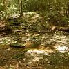 Before reaching the Jacks, the Penitentiary Branch trail crosses its namesake creek.
