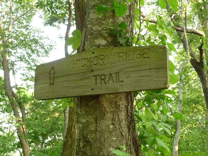 After two miles on the Cowpen trail I reach the jct with the Hickory Ridge trail.