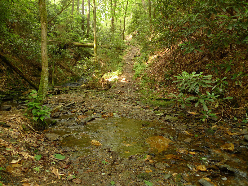The Hickory Ridge trail crosses a little creek before reaching Jacks River where there's a main crossing and usually easy.
