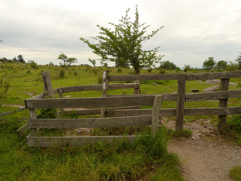 A typical hiker's gate in Mt Rogers.