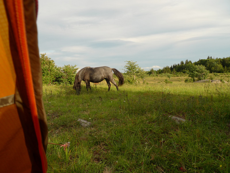 After the storm and towards evening the ponies come up to my camp and we talk.