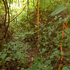 After an hour on the logging cut I realise the SAW boys didn't clear the worst of the trail and then I hit this ribbon blocking the trail as it emerges from a wall of brush behind the tape.  Why they took the time to string this ribbon instead of actually clearing the trail I'll never understand.  It must be said that the SAW boys did come out and clear a half mile of the South Fork trail on the end portion of the logging cut to the Jeffrey Hell trail.
