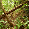 The 2 Year Blowdown---This nasty blowdown blocks the Grassy Branch trail and hasn't been touched in 2 years.  In 2 more years it will be the 4 Year Blowdown.  My trip begins at Grassy Gap and on the Grassy Branch trail in the Citico wilderness.