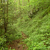 I leave Fern Camp and take the Brookshire trail up on pretty tread as shown.