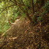The Stiffknee trail as it leaves Farr Gap.