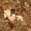 The backpackers I see the day before leave this oatmeal mess on top of the Frog and right in the middle of a campsite.